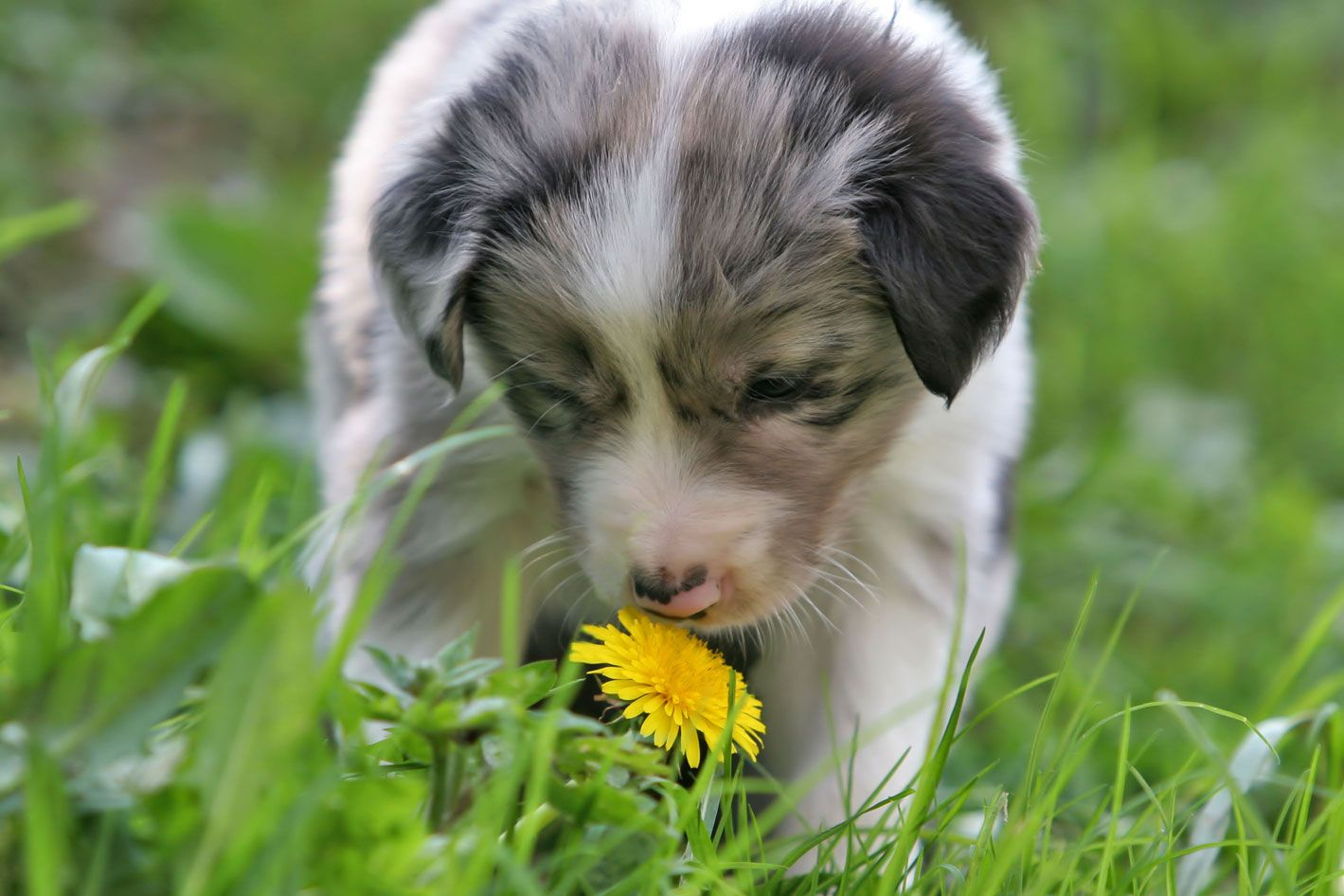 Applied Herbal Choices Consultation & Prices A Dog's Approach Malvern