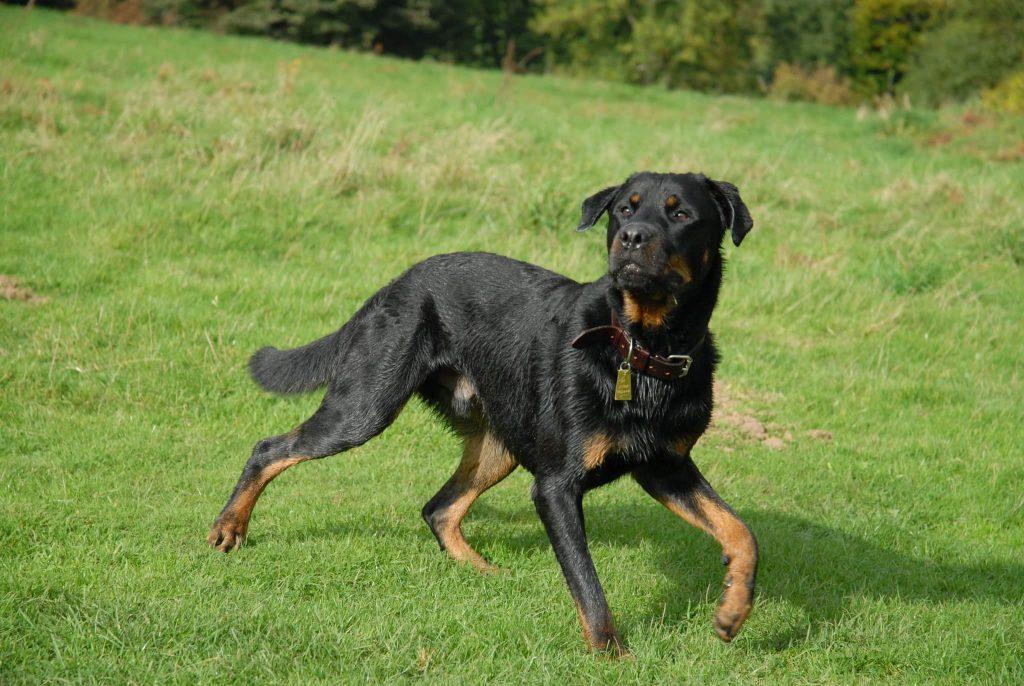 Bespoke Dog Walking Service Worcestershire