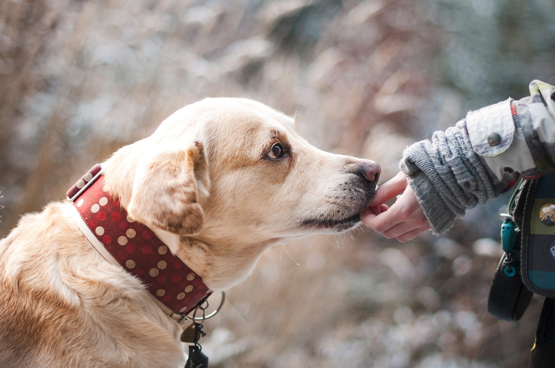 Human holds out hand to dog for trust. Behaviour & Communication Consults Malvern