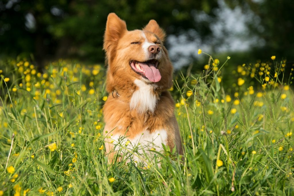 Bespoke Dog Walking Service, A Dog's Approach, Malvern Worcestershire