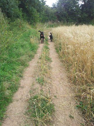 Bespoke Dog Walks Malvern Worcestershire